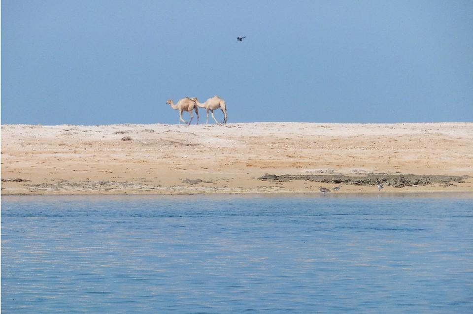 Рас-аль-Хайма: пустыня и теплое круглый год море.