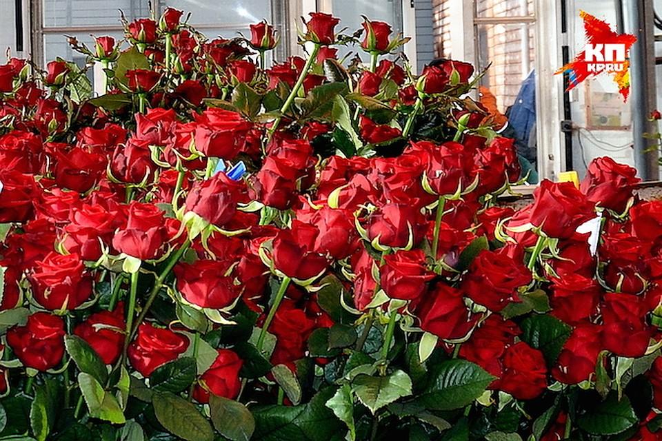 buket-belih-gollandskih-roz-foto-v-mashine-dostavka-tsvetov-florist-ru