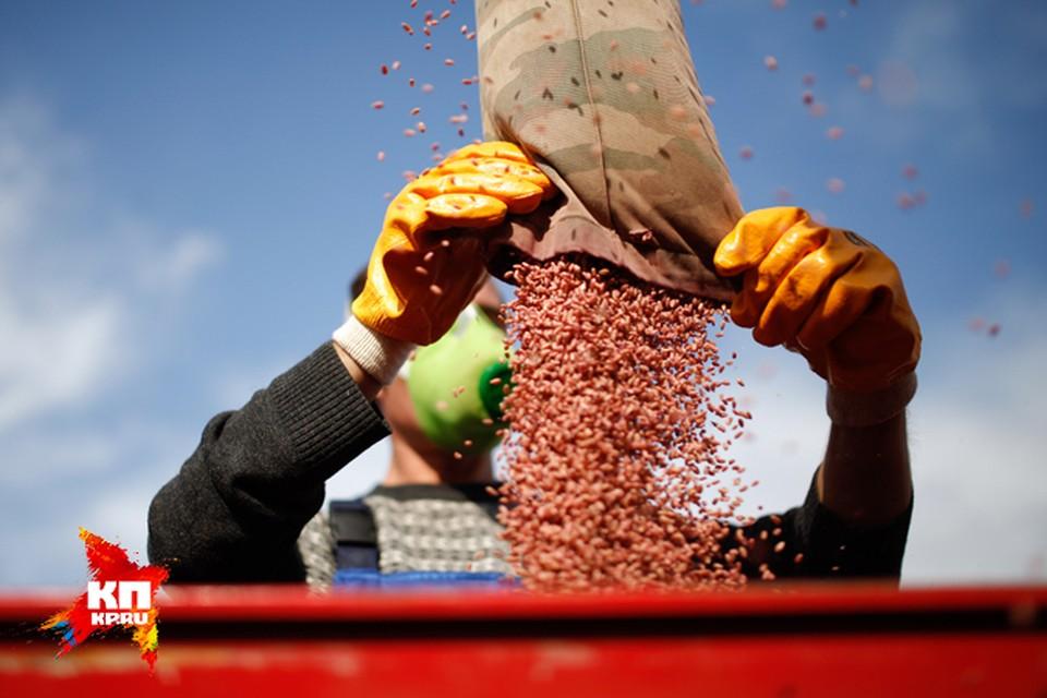 На поддержку семеноводства в этом году будет выделено большее количество средств.