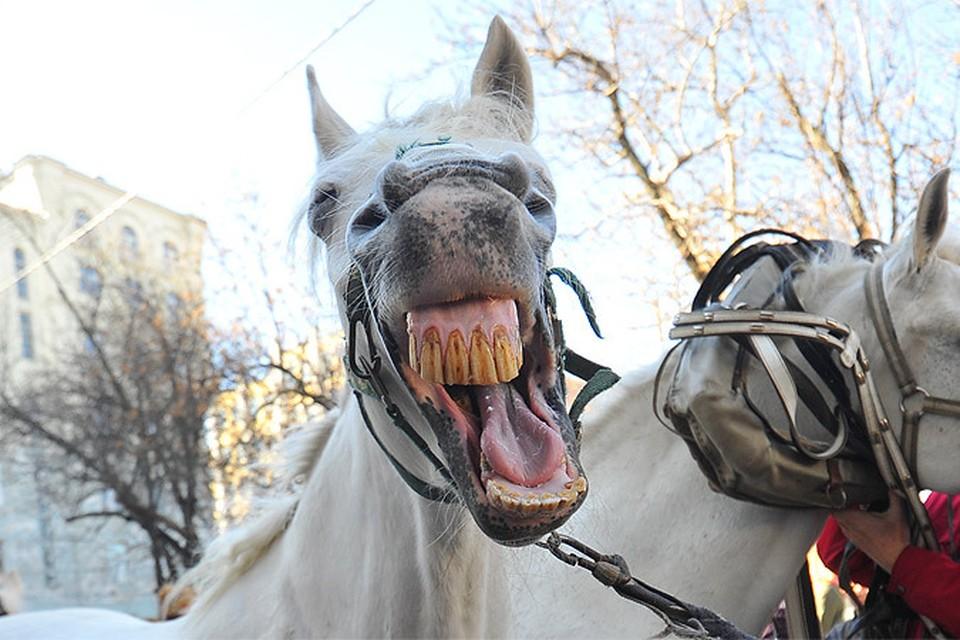 """""""Это поодиночке каждая лошадь - благородное животное, а в паре, да еще в темноте они просто две скотины."""""""