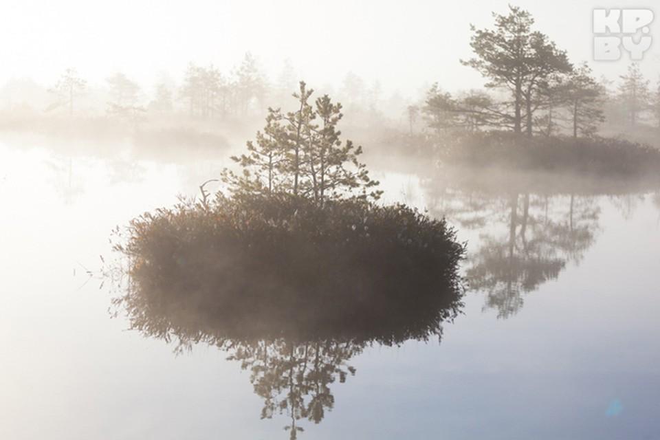 Красота белорусских болот.