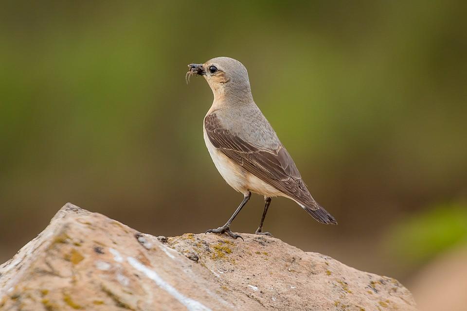 блестяшки, птицы воронежской области фото с названиями центральной части размещают