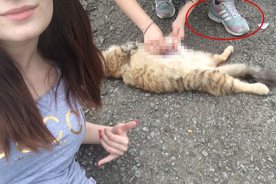 Социальные сети потрясли жуткие кадры, на которых неустановленные девушки издеваются над собаками и кошками.