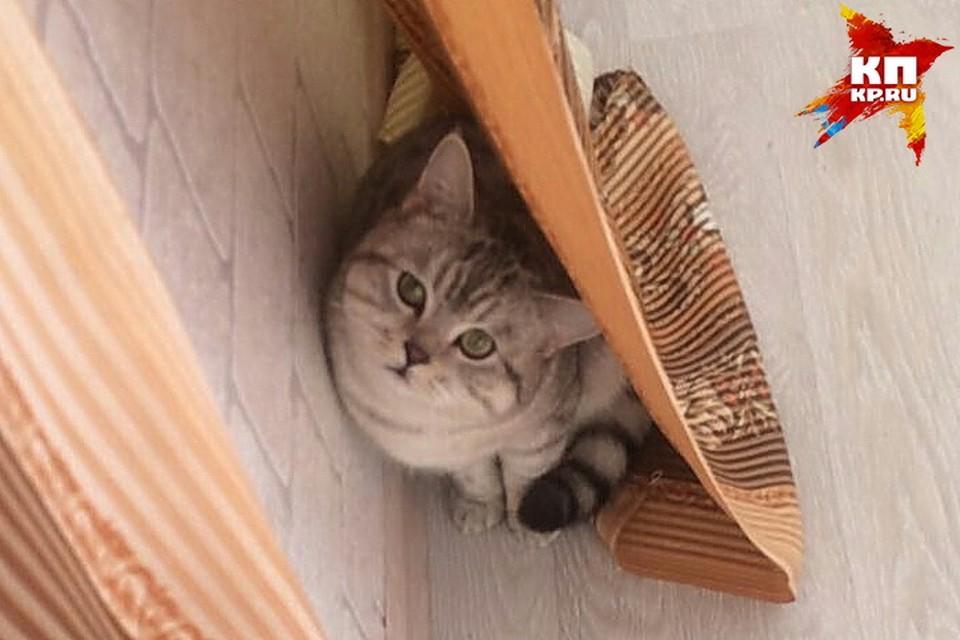 Этот снимок был сделан перед тем, как кот отправился к новой хозяйке.