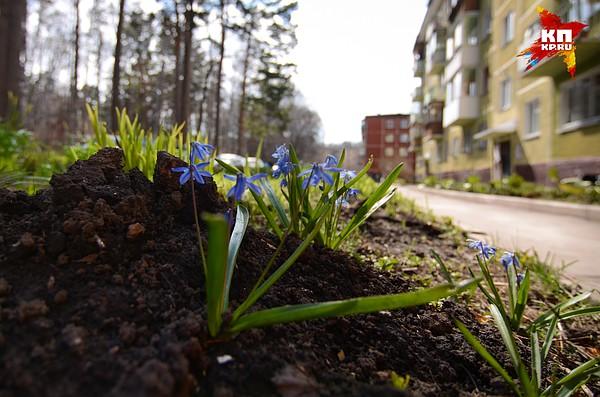 Заказ цветов новосибирск академгородок, фрезий