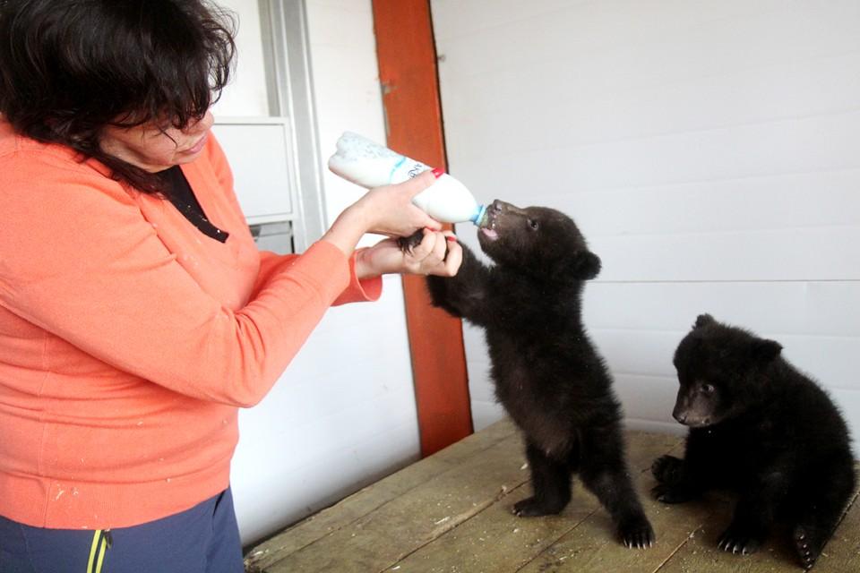Медвежата Тема и Маня