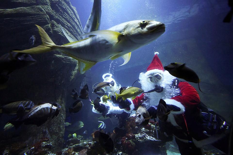 В мюнхенском аквапарке появился свой Санта-Клаус