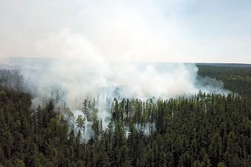 В Красноярском крае действуют 89 лесных пожаров на общей площади 162 тысячи гектаров