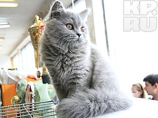 Выставки кошек дворце спорта в барнауле онлайн лиги ставок