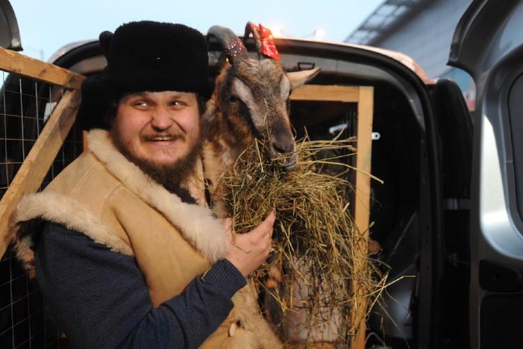 Олег Сирота и коза Меркель перед посадкой в самолет