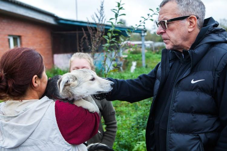 Собаки сразу почувствовали, что Андрей Ургант - хороший человек. Все хотели, чтобы он их погладил.