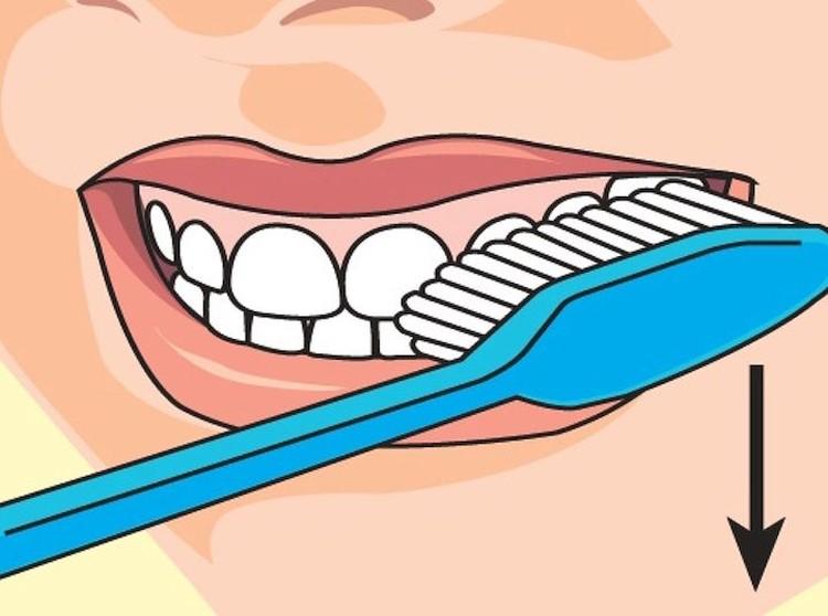 Правильная чистка зубов: шаг первый. Схема: Дмитрий Полухин