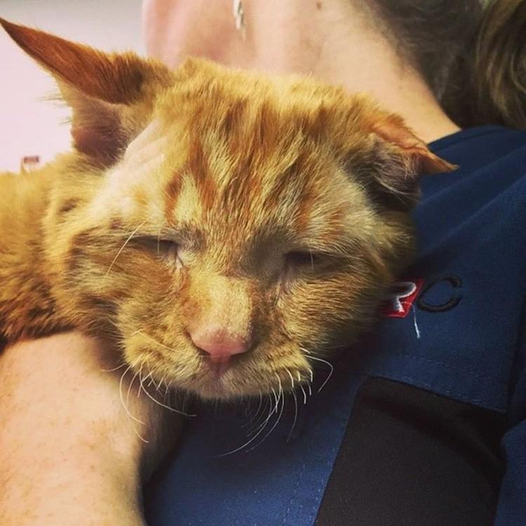 Сотрудница ветклиники спасла животное от эвтаназии