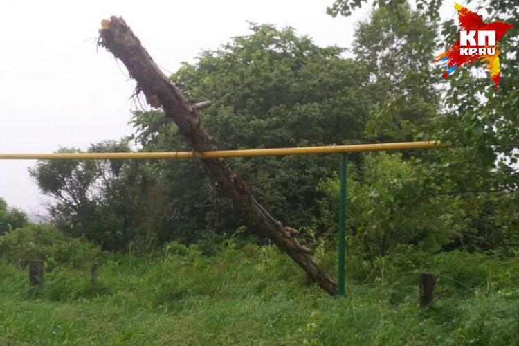 В селе Чернуха дерево упало прямо на газопровод.