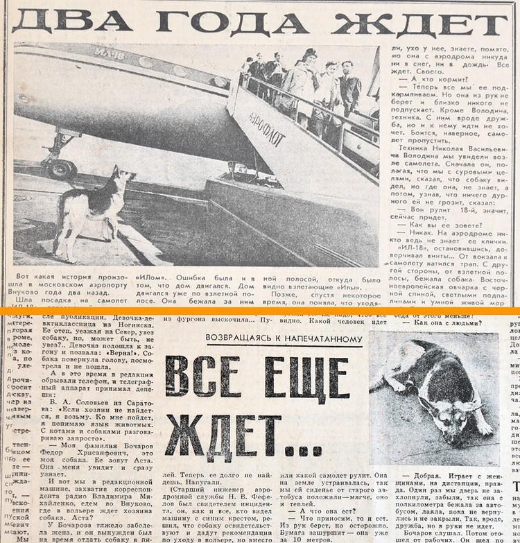 """Публикации в """"Комсомольской правде"""" о судьбе преданной овчарки."""
