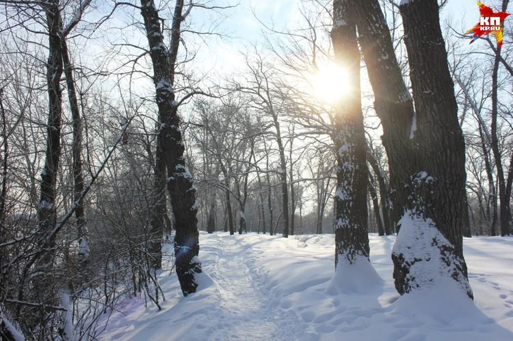 Пройтись по зимнему лесу приятно и пешком, без лыж.