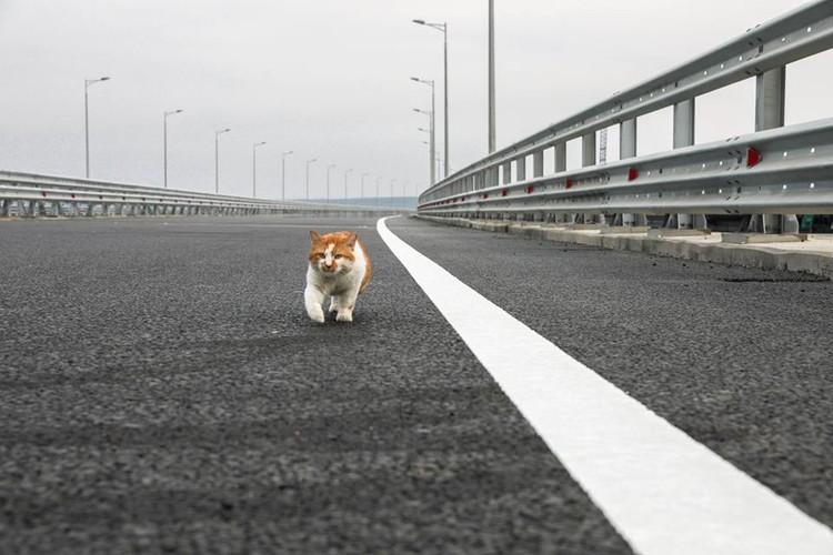 накануне открытия первым пробежал 19 км кот Моста. И убедился: Все готово! Фото: страничка Мостика в ФБ