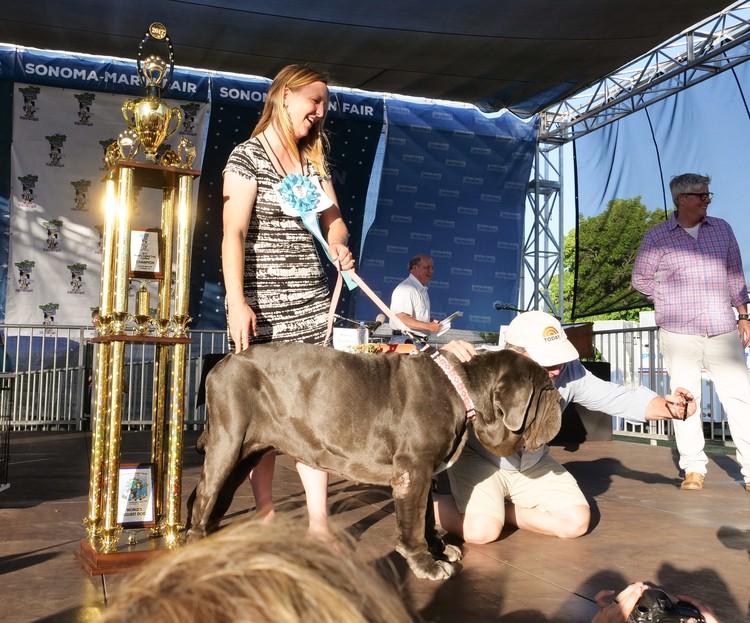 Прошлогодний победитель Марта. Фото: Sonoma-Marin Fair