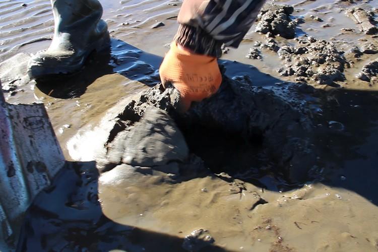 Найденная шкура мамонта. Фото: Академия наук Республики Саха