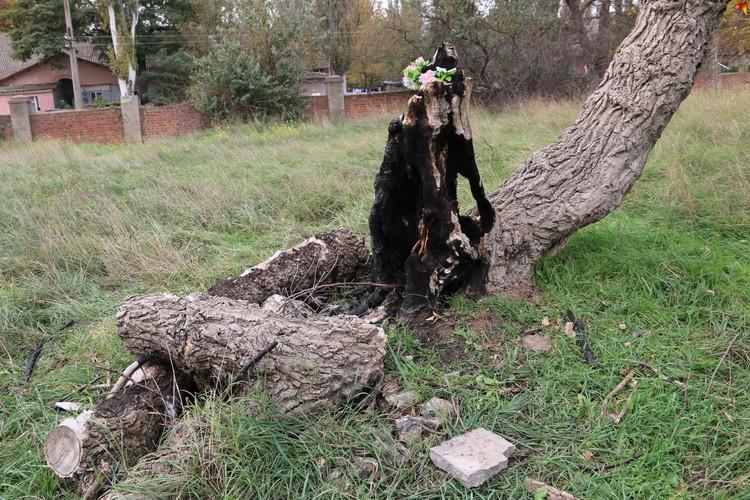 """Обгоревшие деревья журналисты тоже """"приписали"""" керченскому стрелку, но так ли это - неизвестно"""