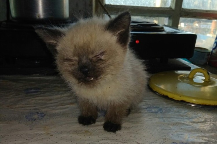 Таким котенка нашли в деревне. Фото: Светлана Ципровская.