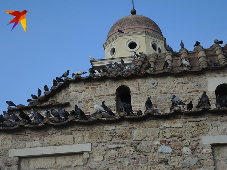 Голуби на церкви - символ мира, но мира нет и в самой церкви