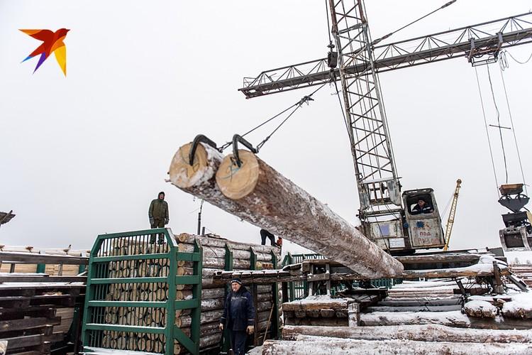 Журналисты «Комсомольской правды» отправились из Москвы в Сибирь, чтобы увидеть своими глазами, действительно ли весь лес здесь хищнически пилится и вывозится в Поднебесную