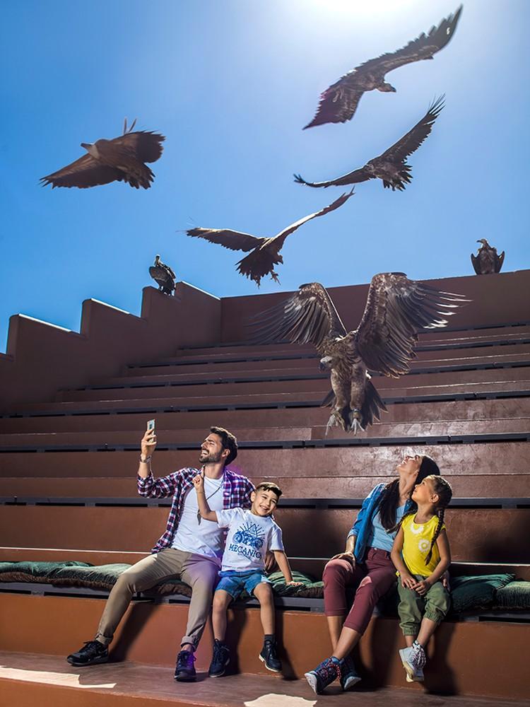 Шоу хищных птиц никого не оставит равнодушным