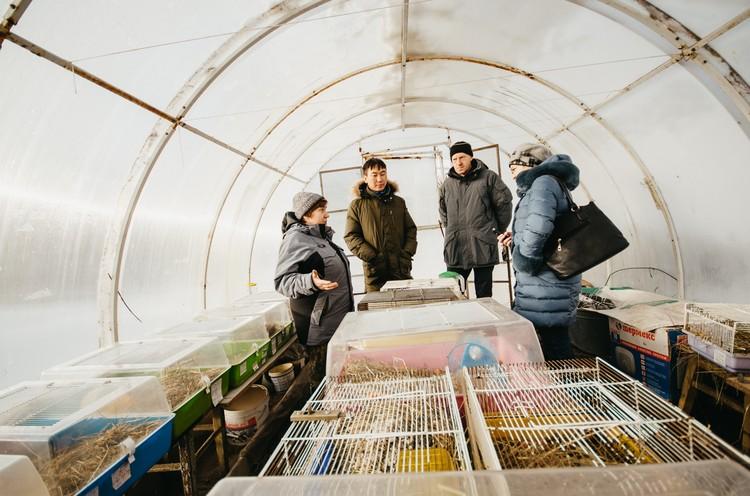 Ольхонских полевок будут выращивать в виварии и выпускать в дикую природу.