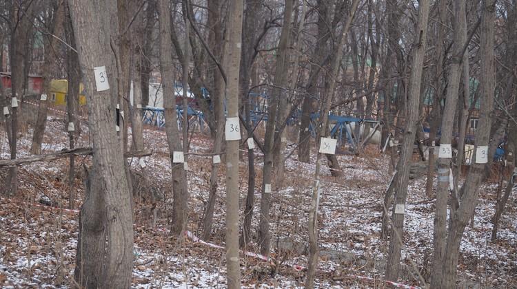 Все деревья в лесу возле ТИБОХ - пронумерованы. Две тысячи штук - и все пойдут под топор