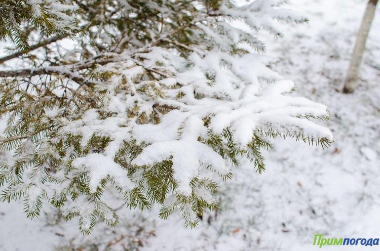 До конца марта во Владивостоке уже вряд ли повторится снегопад. Фото: primpogoda.ru