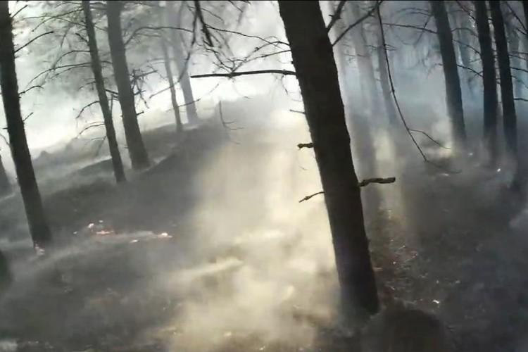 Пострадавший от пожара лес. ФОТО: кадр видео Романа Жатова.