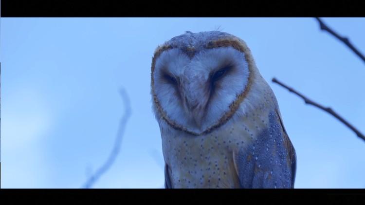 Кадр из фильма. Фото: Краснодарская киностудия «ЛисАрт»