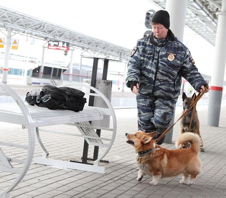 Малыш ищет наркотики в нижегородских поездах