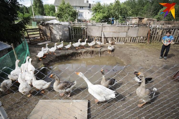 Птичий двор.