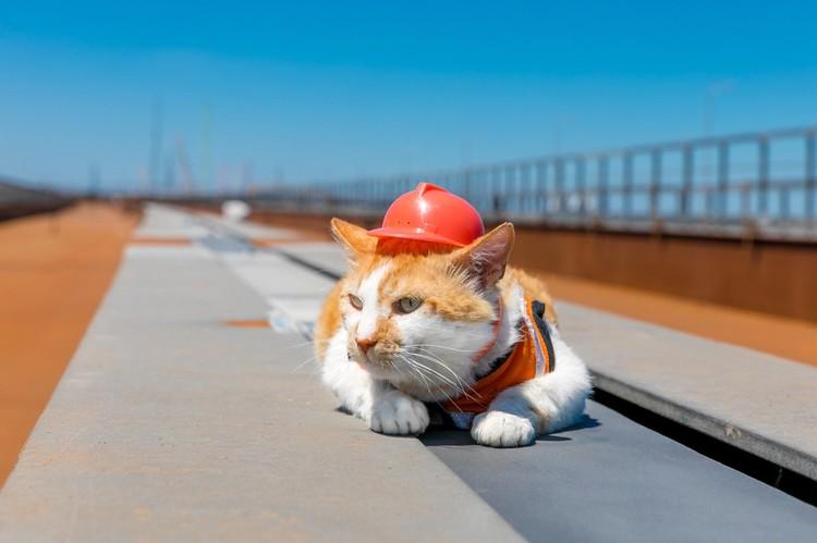 Техника безопасности для кота - это не пустой звук. Фото: Кот Моста/VK