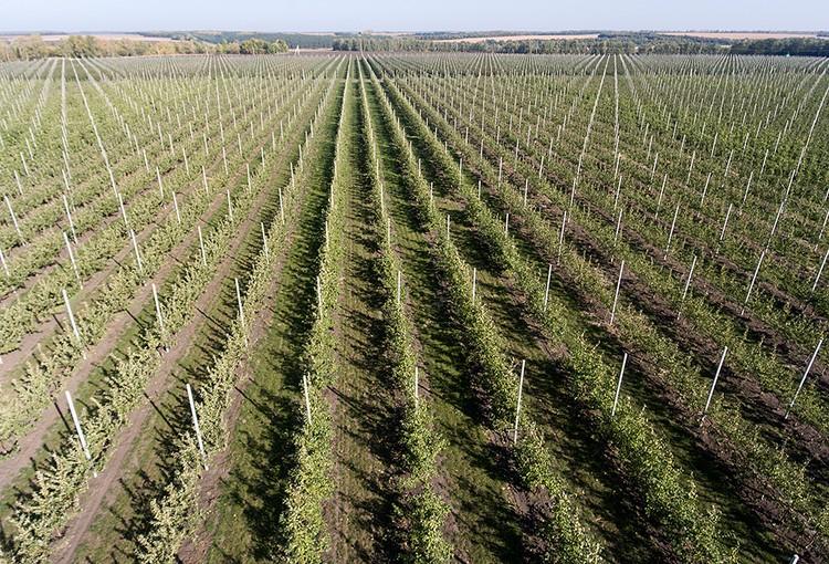 У нас есть все условия для того, чтобы выращивать свои фрукты - в частности, яблоки