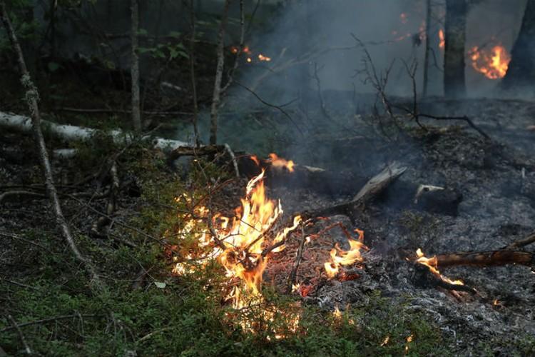 За каждый кусочек леса ведется ежедневная борьба Фото: правительство края