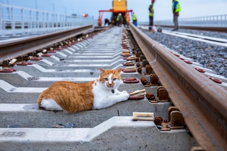 Кот знает все тонкости укладки шпал через Керченский пролив. Фото: Кот Моста/VK
