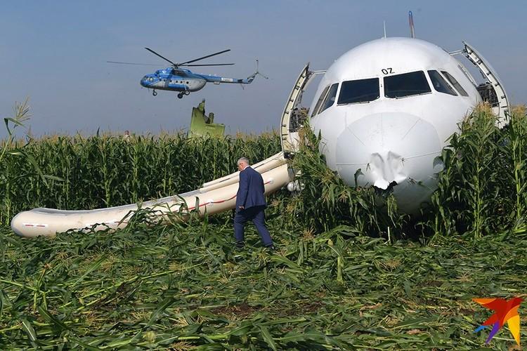 """Самолет """"Уральских авиалиний"""" совершил вынужденную посадку на кукурузное поле после того, как оба двигателя отказали из-за столкновения при взлете со стаей чаек."""