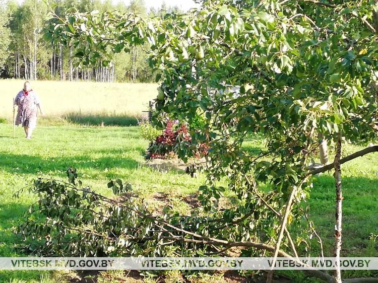 Животному понравились спелые ароматные груши. Фото: УВД Витебского облисполкома