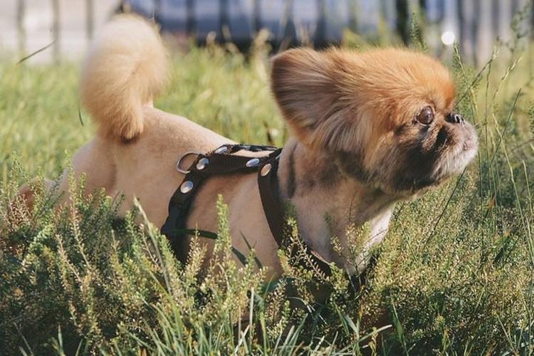 Из-за постоянных избиений, у пса могут быть проблемы со зрением. Фото: Ольга ТИХОМИРОВА.