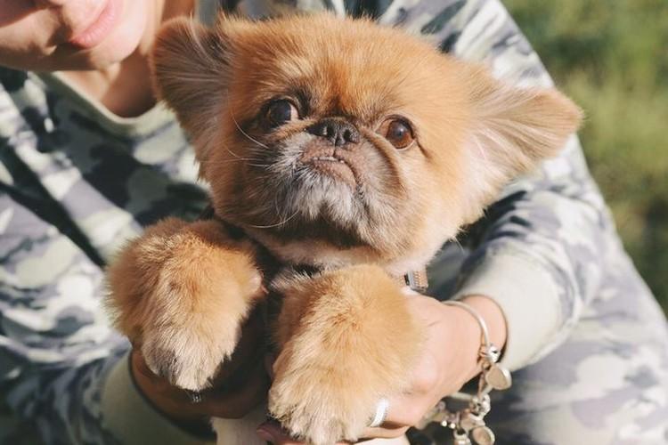 Филипка оказался очень спокойным и ласковым псом. Фото: Ольга ТИХОМИРОВА.