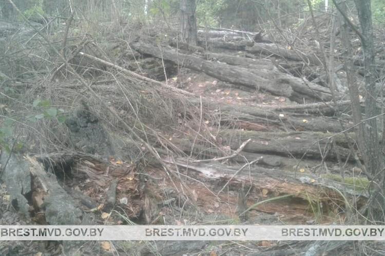 В окопе в лесу был найден боеприпас. Фото: УВД Брестского облисполкома.