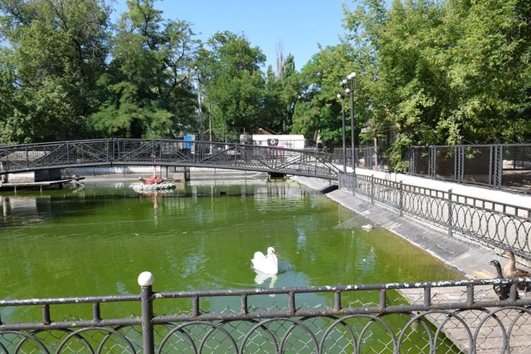 Пруд Докучаевского зоопарка
