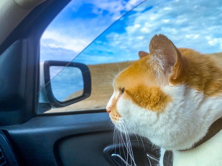 Не опаздывает, а задерживается! Фото: кот Моста/VK