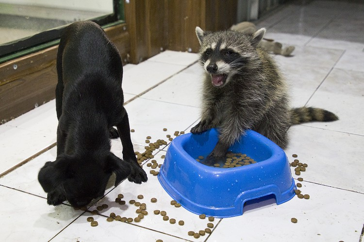 Малыши с удовольствием кушают из одной миски.