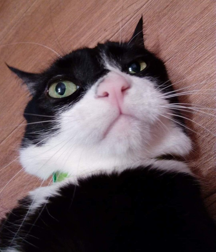 Неудивительно, что Максим был главным котом во дворе. Фото героев публикации