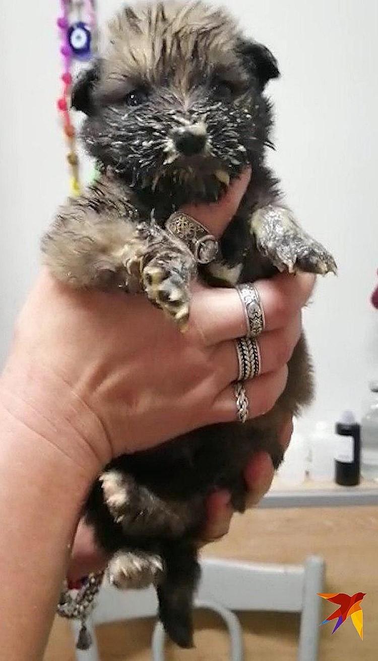 Выживший щенок Жужик сейчас у зоозащитников. Фото: Светлана КОНДРАШОВА