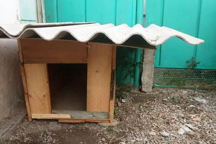Для Джесси уже построили будку. Фото: Ольга БУРЛАКОВА